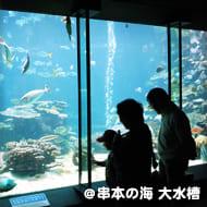 串本の海 大水槽