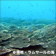 串本・ラムサールの海