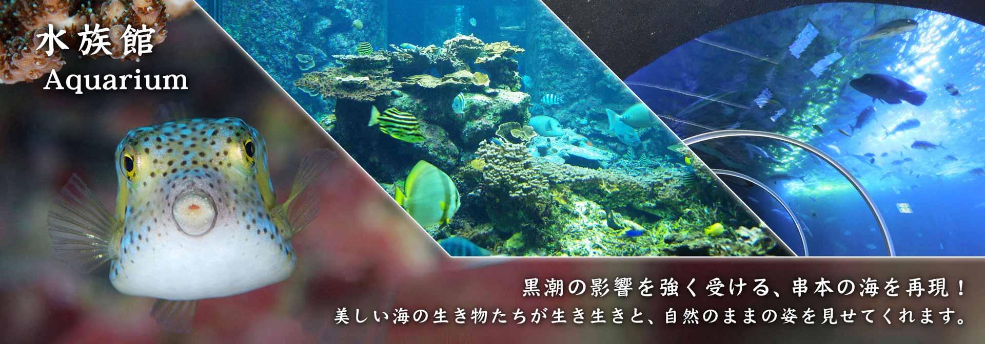 水族館  Aquarium