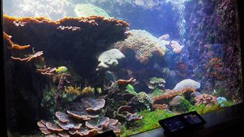 串本の海の生き物たち