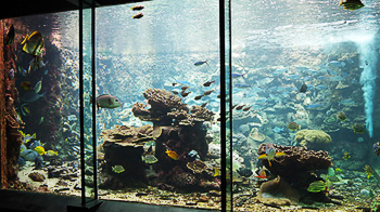 「串本の海」大水槽