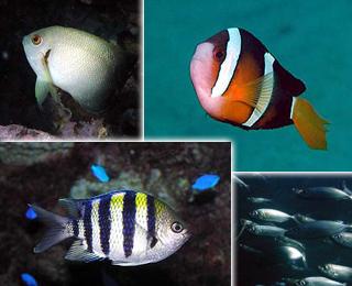 海中展望塔で見ることのできる魚達