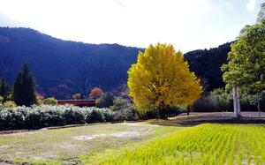 05秋の龍神村.jpg