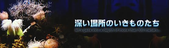 banner_sinkai18.jpg