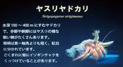 deepsea01.jpg