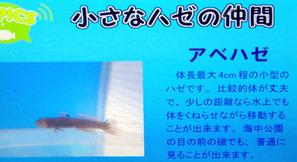s_haze20203.jpg