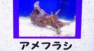 s_amefurasi1.jpg