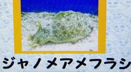 s_amefurasi2.jpg