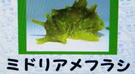s_amefurasi3.jpg