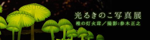 banner_ひかるきのこ4.jpg