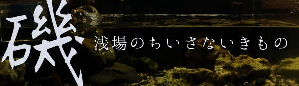 banner_iso18.jpg