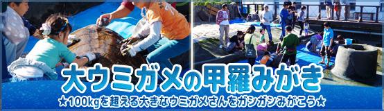 banner_koura17.jpg