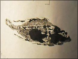 gyotaku02.jpg