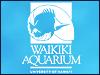 icon_waikiki.jpg