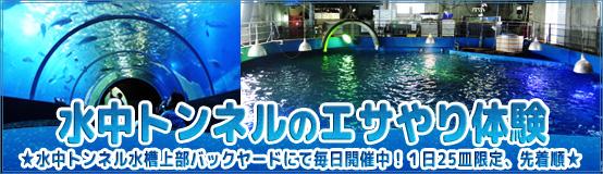 maguroesa_banner17.jpg