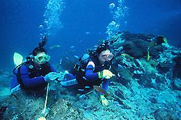 サンゴの海で体験ダイビング