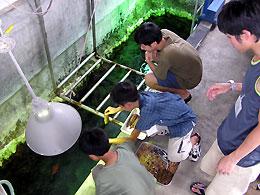 水族館飼育体験